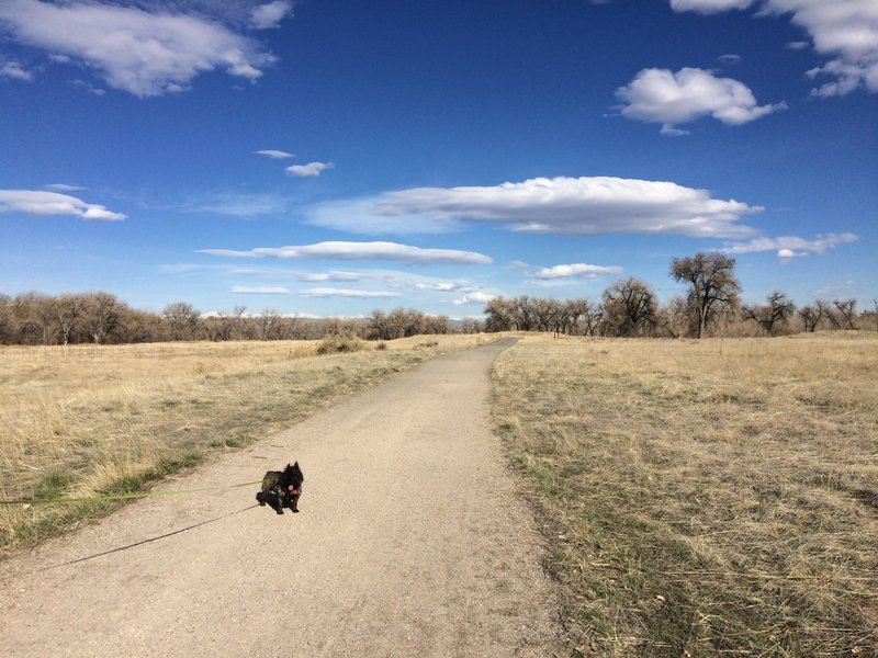 Sand Creek Greenway Trail is pleasantly surfaced with fine gravel, making it easy on both your and Fido's feet.