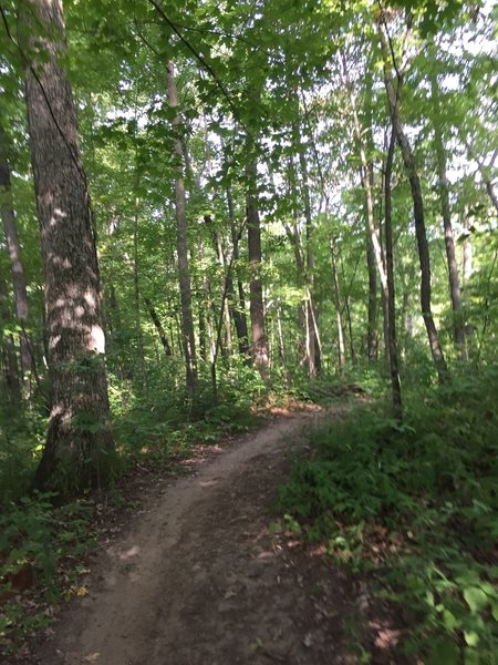 Singletrack through the woods on the Potawatomi Trail.