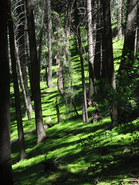 Luscious forest floor flows along the Mill Creek Terraces.