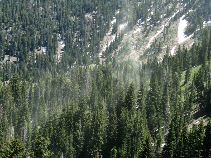 A huge pine tree pollen release at Ant Knoll is triggered by a gust of wind.