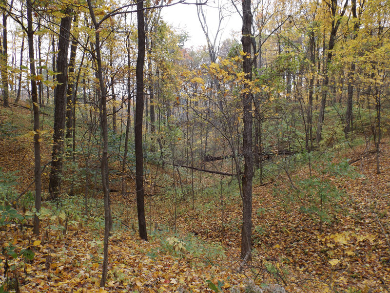 Fall woodlands make for a pleasant sight on the Orange Trail.