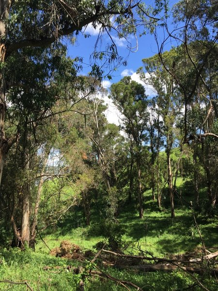 Walking along the Bull Valley Trail, enjoy pleasant green forests before hitting the beach.