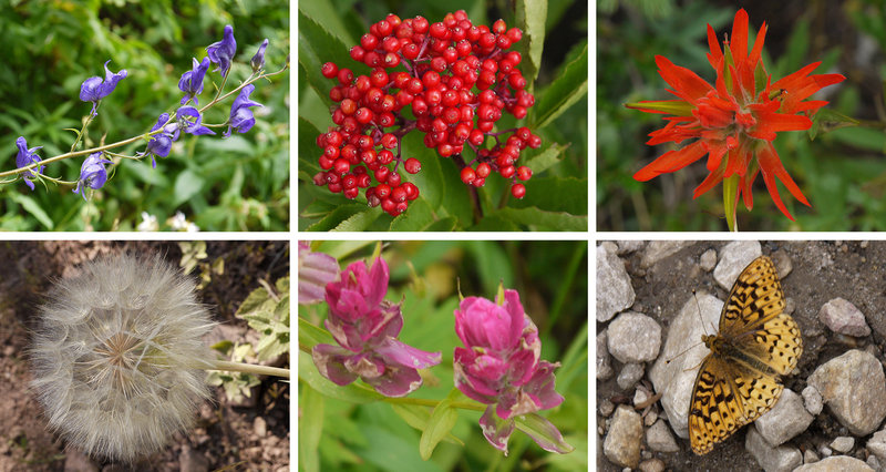 These are some of the flora and fauna you can expect to see during a Wasatch summer on Mill D South Fork.