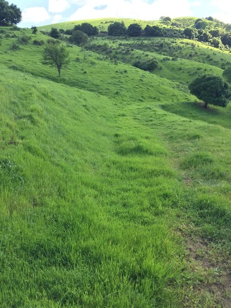 The hills around Port Costa are verdant and lush after heavy winter rains.