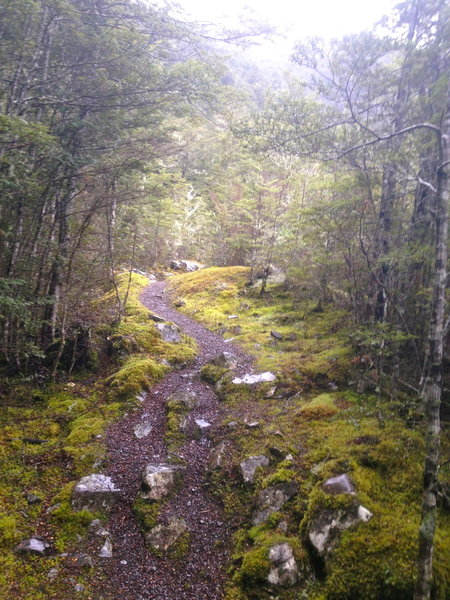 The trail to Casey Saddle Hut is quite mossy in sections.