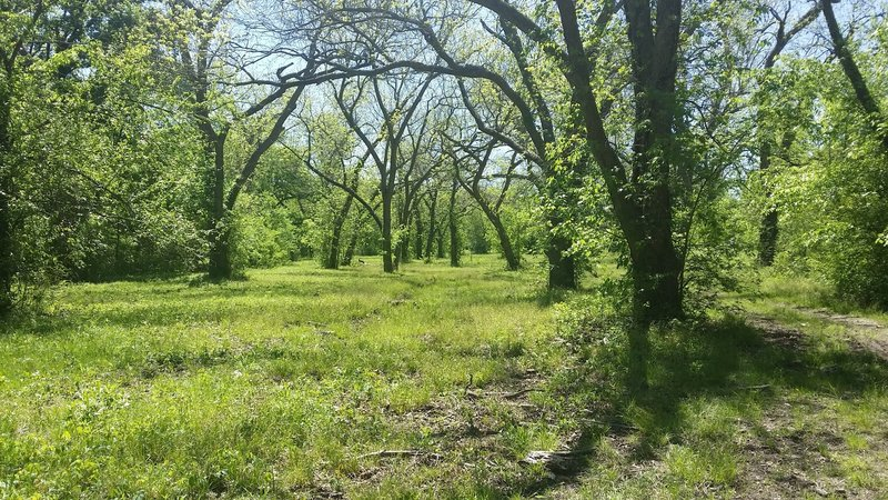 A lovely grove of trees stands along the trail.
