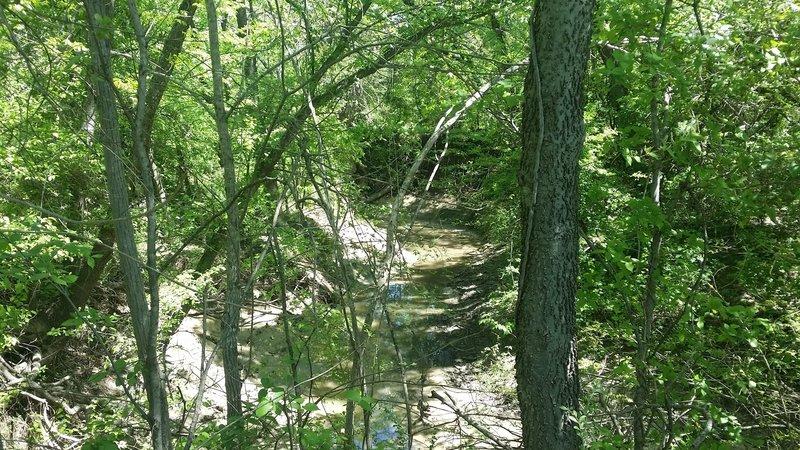 Cottonwood Creek is quite overgrown.