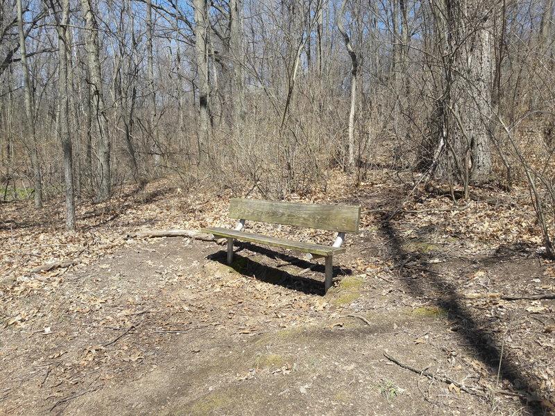 Birds often congregate on this bench along the Deer Run Trail.