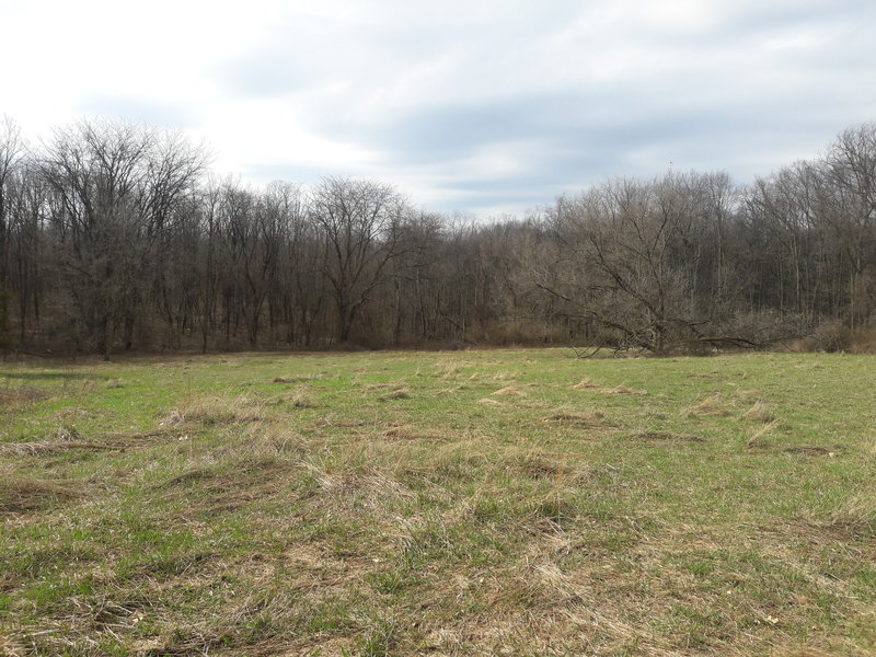 This is the largest clearing along the Chickadee Trail.