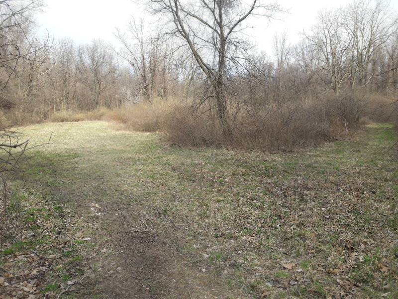 If traveling the Chickadee Trail loop east to west, this is a junction you'll come across. The trail continues along the left branch.
