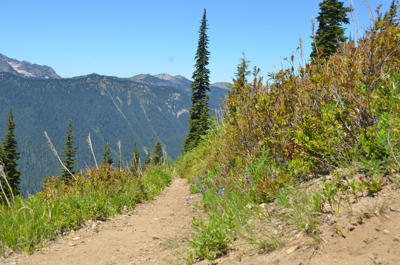 In its upper section along the alpine meadow, the Crystal Peak Trail is in wonderful shape, not to mention it boasts beautiful wildflowers in the spring!
