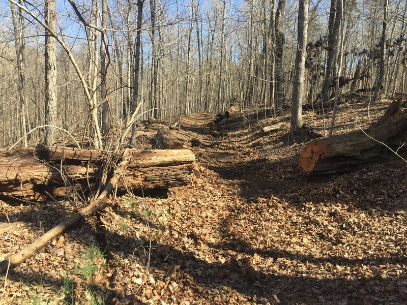 The trails are being actively maintained and kept open.