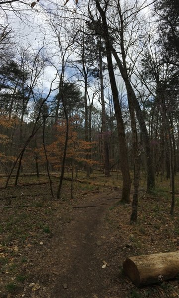 The Occoneechee Loop is heavily forested.
