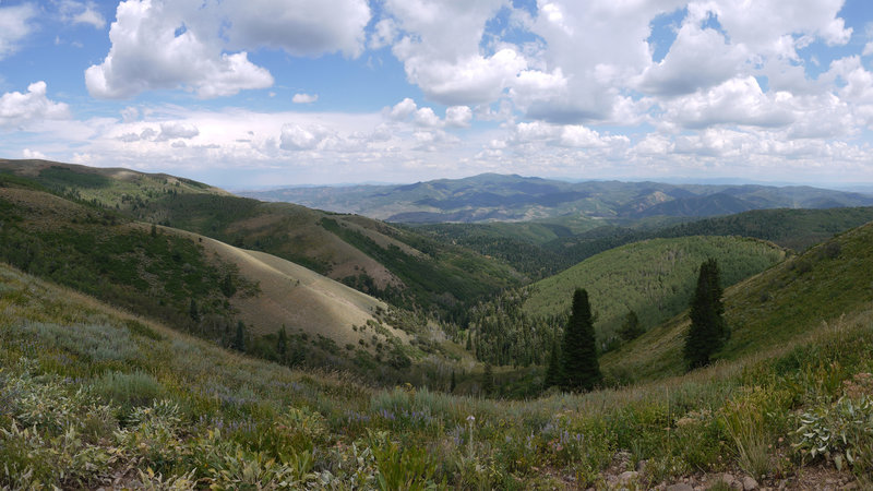 This is a 90 degree panorama centered west toward Lookout Peak from the Great Western Trail near Big Mountain.