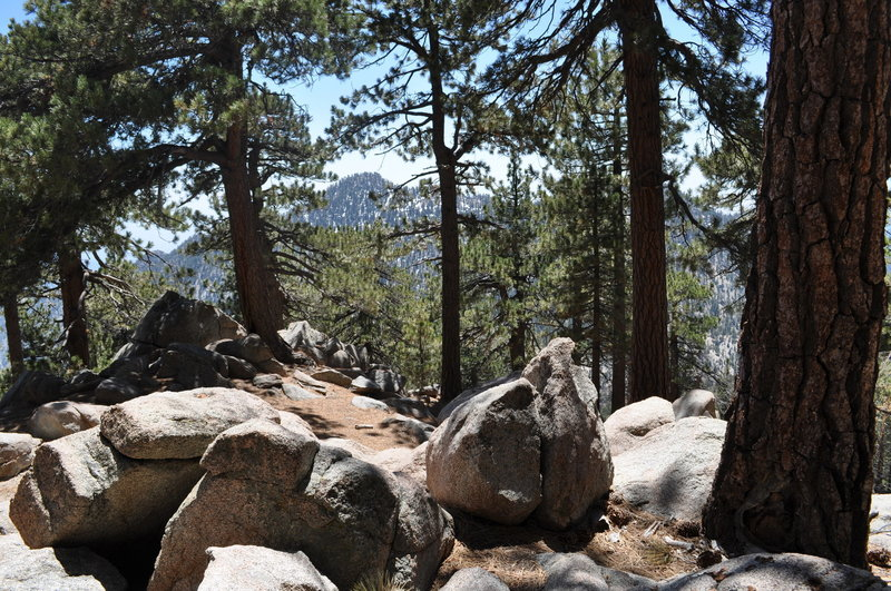 Enjoy a nice pine grove near the fork up to Mt. Waterman overlooking Twin Peaks often covered in snow.