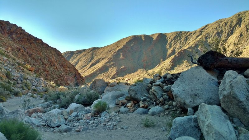 Early morning is a great time to experience the Palm Canyon Trail.