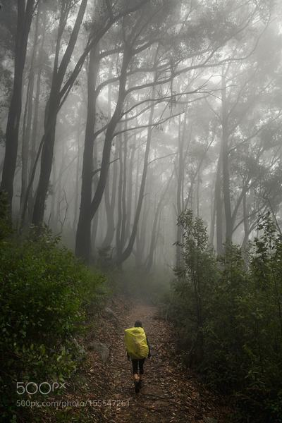 Misty forest walking starts our day on the way to Sealers Cove.