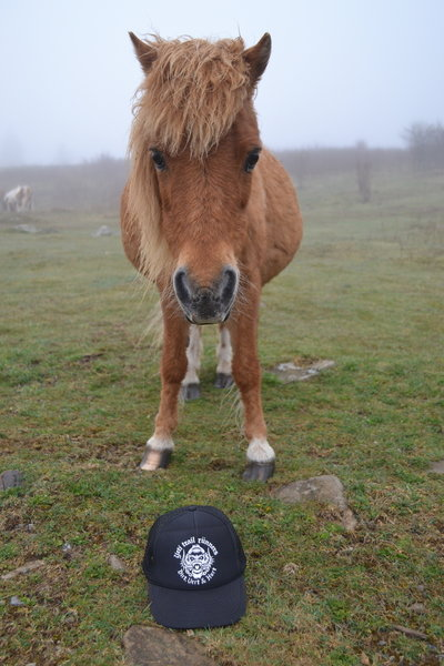 You may have the opportunity to meet the friendly ponies at Grayson Highlands State Park in Virginia.
