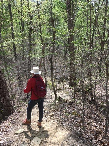 Elizabeth descends the Elm Lick Trail through dense young forests.