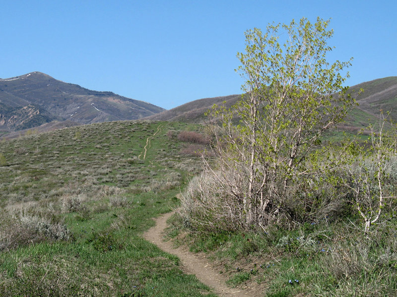Little Mountain Ridge Trail makes its way up the hill.
