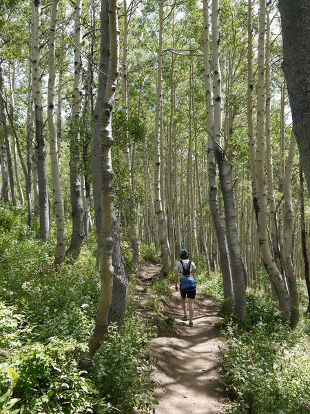 Enjoy beautiful hiking through an aspen grove on Scott's Bypass.