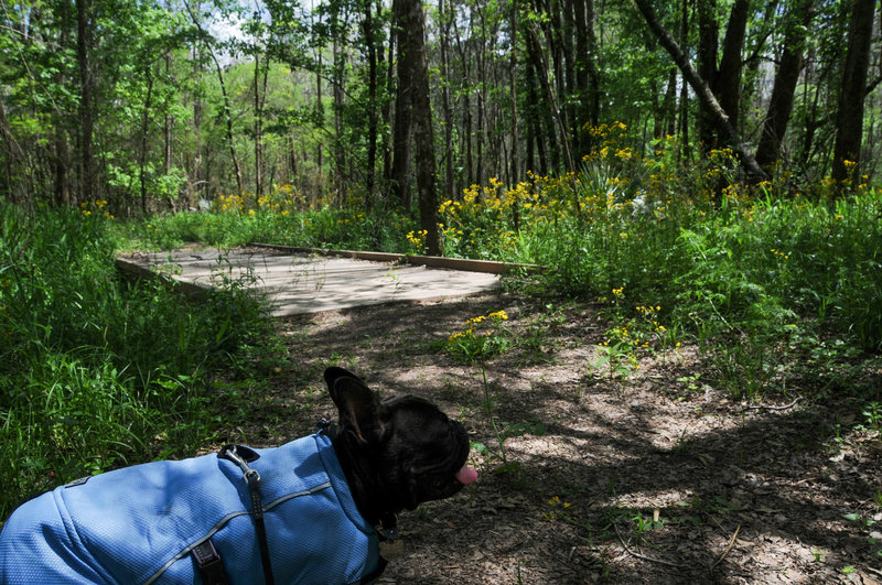 The wide Woodlands Trail passes through forest carpeted in flowers.