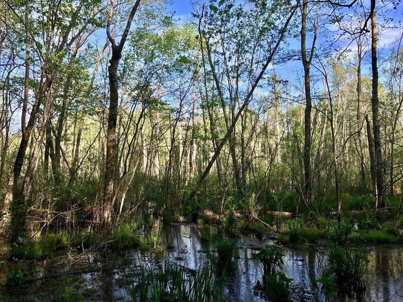 A swampy area alongside the trail.