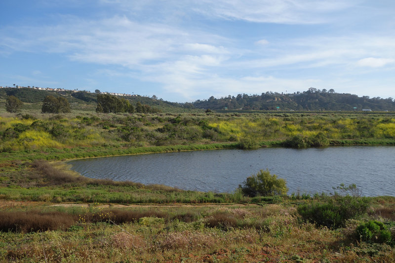 A seasonal pond adds to the ambiance at San Dieguito Lagoon.