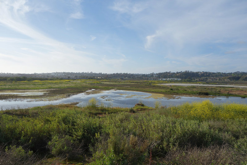 Enjoy wetlands and mustard blooms in San Dieguito Lagoon.