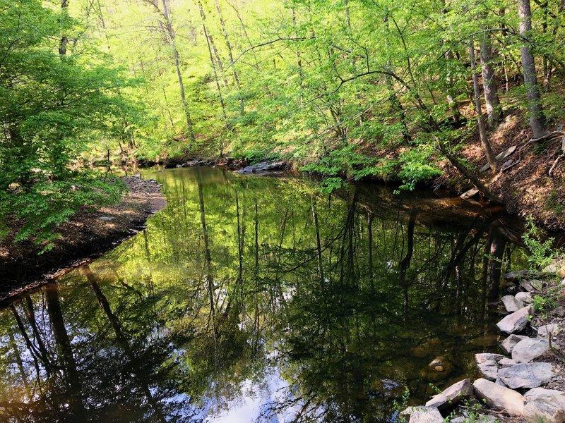 Morgan Creek along the Elephant Rock Trail.