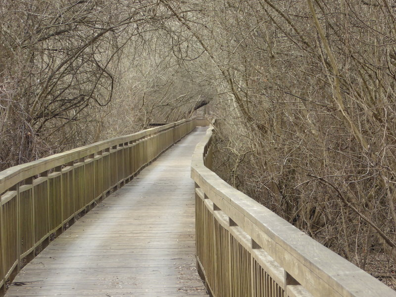 The trail follows a boardwalk through the bayou.