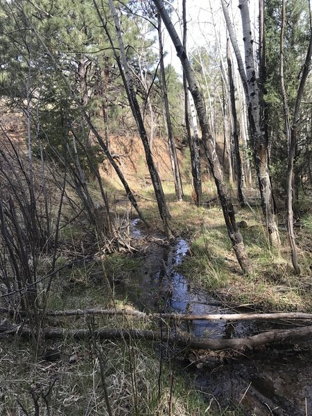 A spring runoff stream on the Clear Creek trail section.