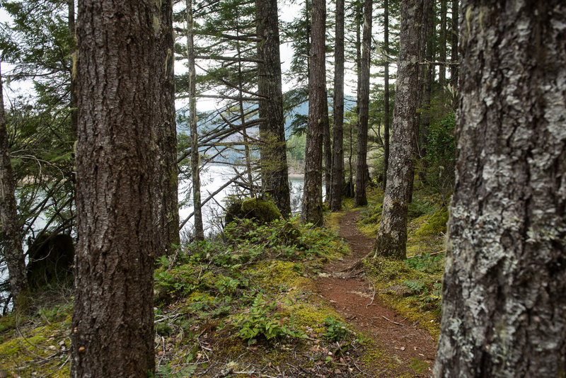 Ribbons of singletrack and lake views make the North Inlet Trail a great option.
