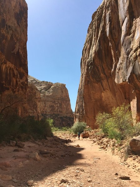 Walk along the gorge to truly experience the towering sandstone walls.