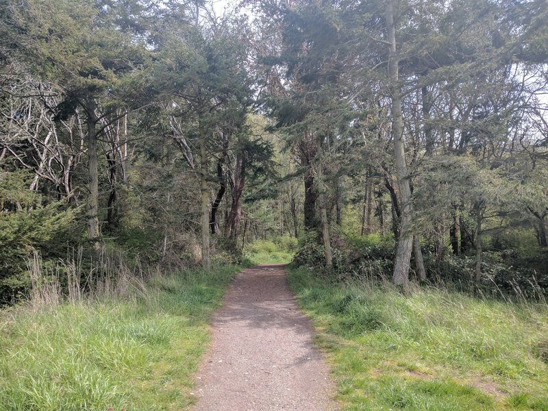 The trail leads through the trees into the park.