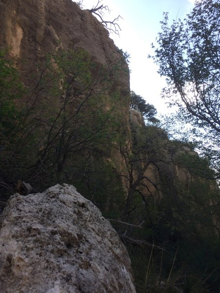 Looking up at the sides of the canyon, you get a true sense of just how tall they are.