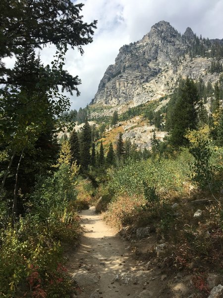 Hiking in the trees brings welcome shade along the Cascade Canyon Trail.
