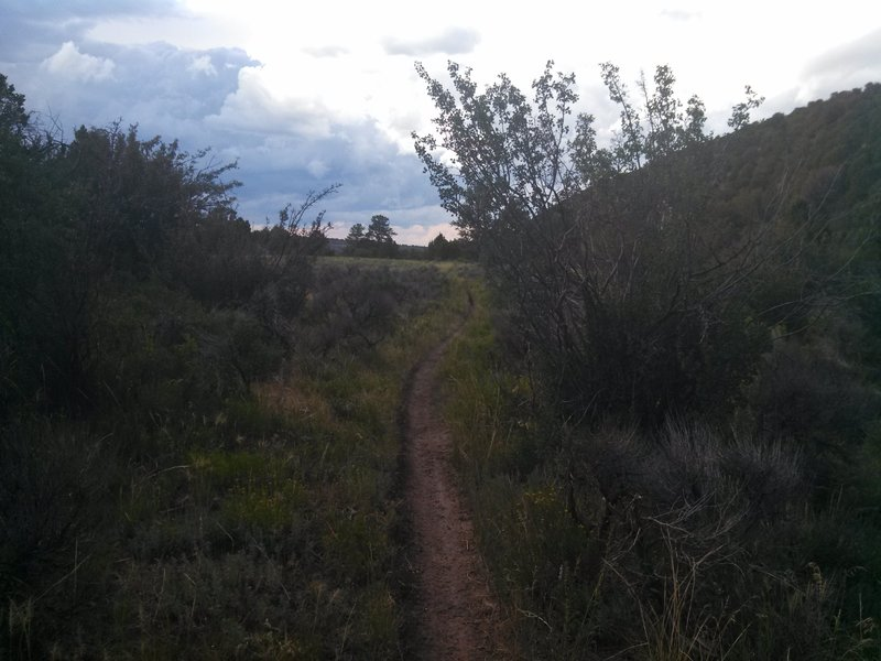 Singletrack near the top of Lower Spring Creek Trail.