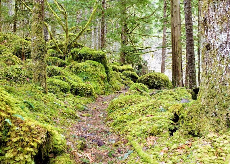 The mossy Oneonta Trail ahead.