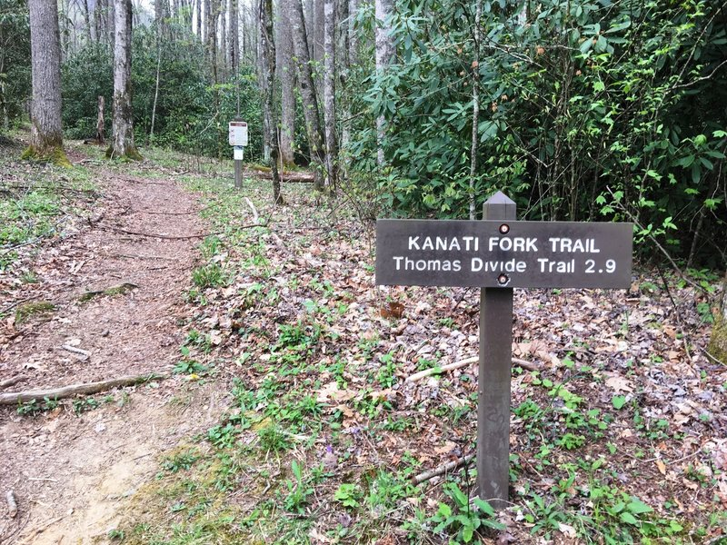 The Kanati Fork Trailhead.