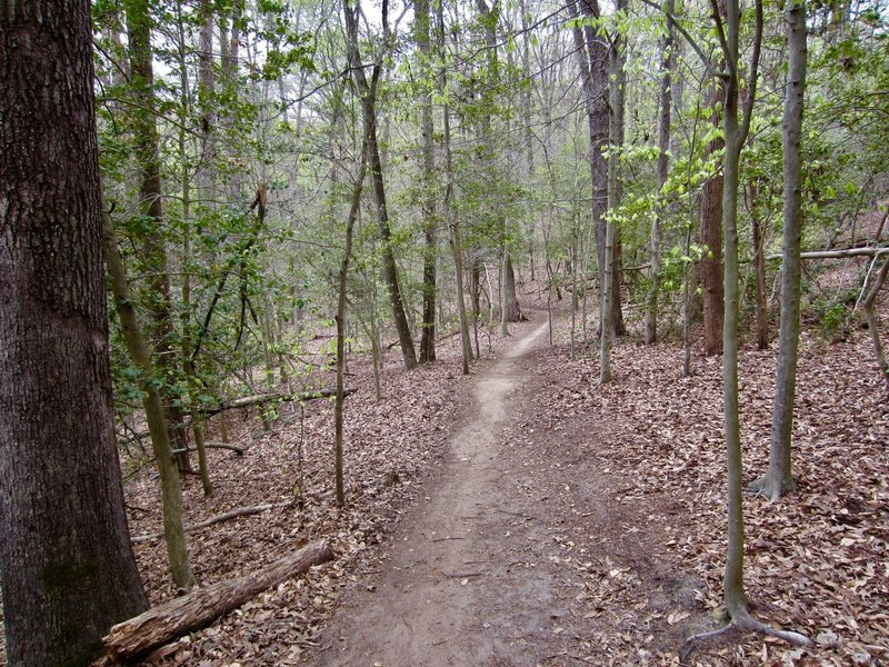 Trails are easy to follow in Bacon Ridge Natural Area.