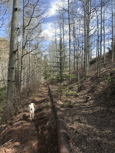 The reason for the trail's name. A no longer in use pipeline runs to the right of the trail.
