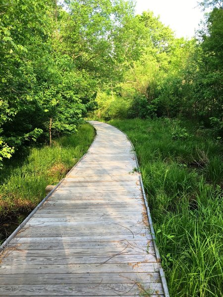 A boardwalk aids your passage through the swamp.
