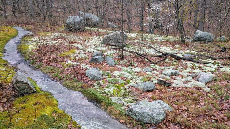 This exposed bedrock path carved through a mossy forest floor is a great place for a respite.