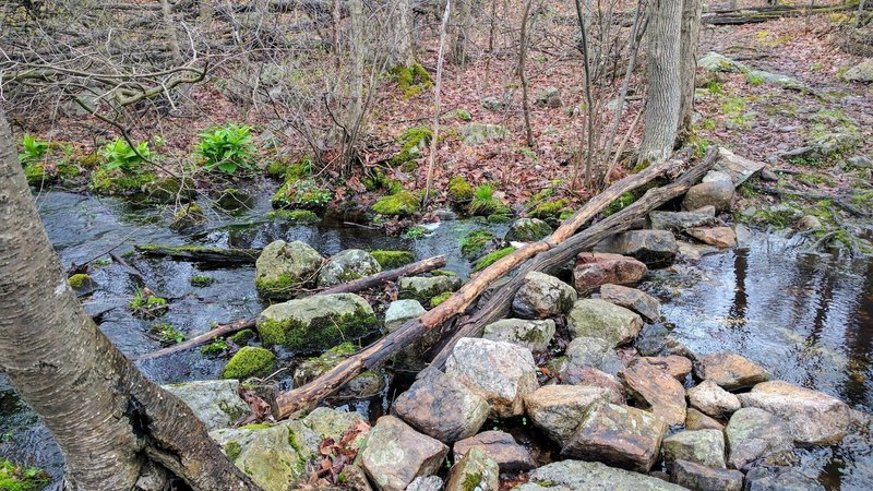 Yellow Trail is a great family hike with many interesting features to keep the kids occupied - like this small brook crossing.
