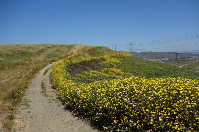 Wildflowers bloom at the start of the Lusardi Creek Loop Trail in the spring.