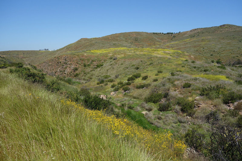 A riparian area along the Lusardi Creek Loop Trail provides habitat for flora to flourish.