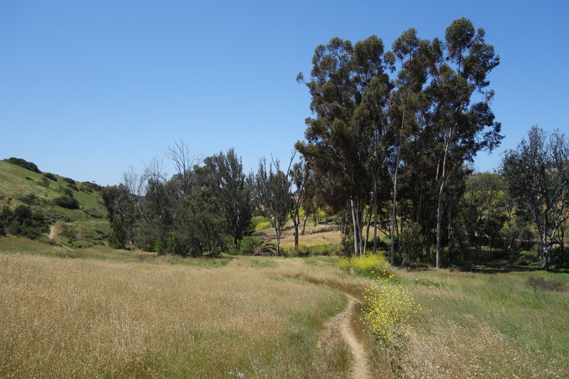 Enjoy this peaceful valley along the Lusardi Creek Loop Trail.