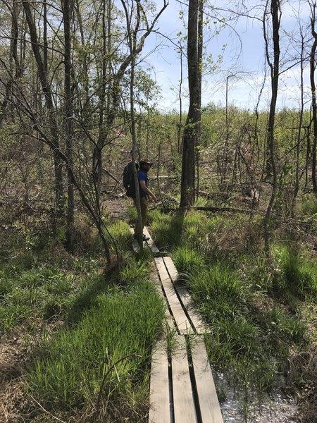 A hiker crosses the bog near Cub Lake.