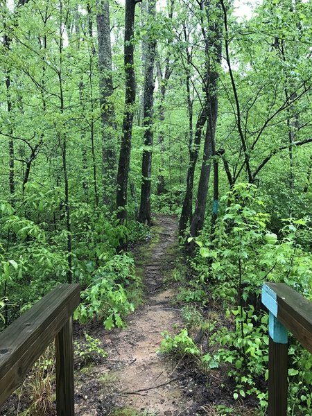 A section of the Friends Trail.